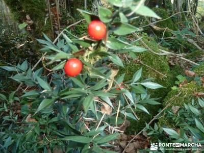 Parques Naturales Urbasa-Andía y Aralar - Nacedero del Urederra; senderismo viajes otoño
